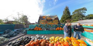Slindon Pumpkin Shop